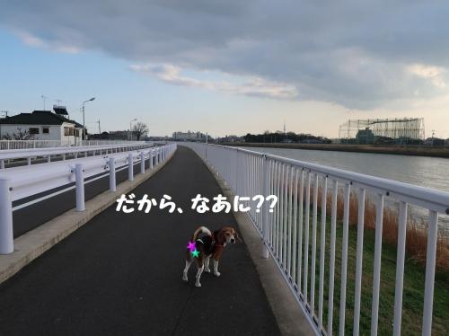 IMG_a5872-2.jpg