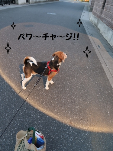 IMG_a5918-2.jpg