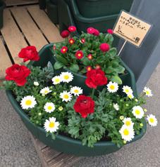 段々花壇プランター 春のお花で。