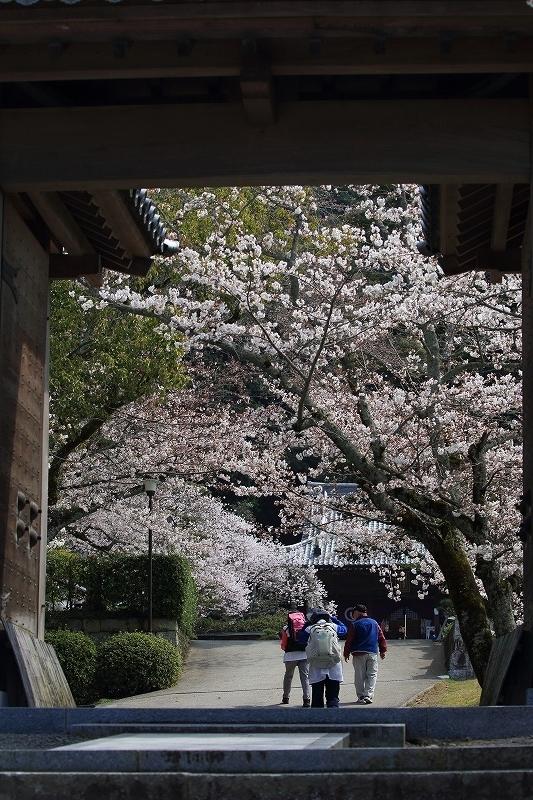 繁多寺桜 180327 02