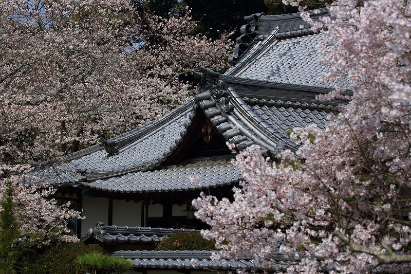 繁多寺桜 180327 04