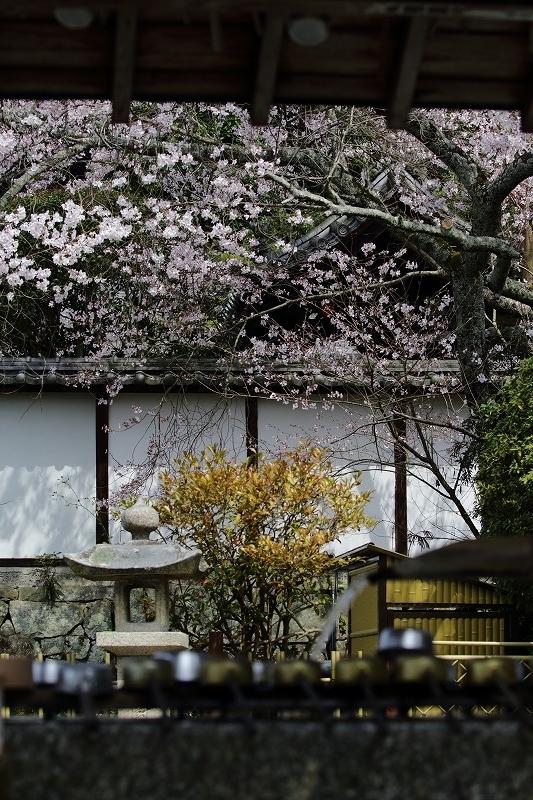 繁多寺桜 180327 05