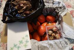 なっつばーさんから種と筆柿