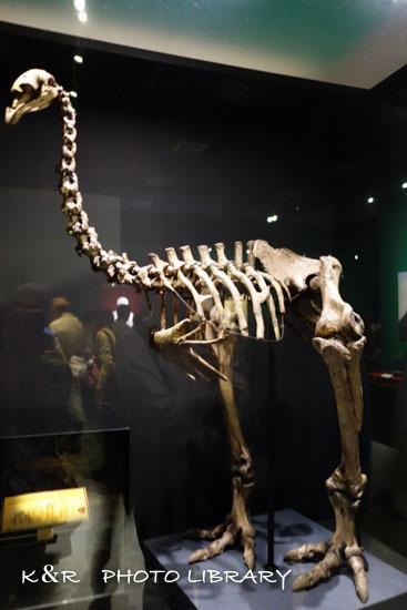 2017年5月28日大英自然史博物館展3