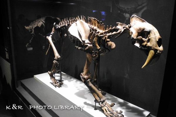 2017年5月28日大英自然史博物館展8