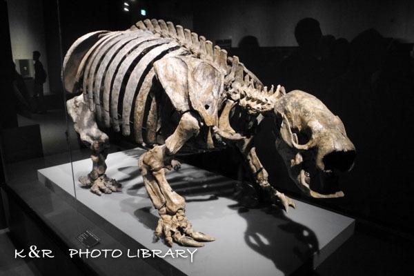 2017年5月28日大英自然史博物館展9
