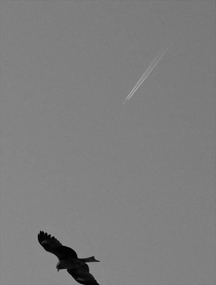 ひこうき雲-1_R