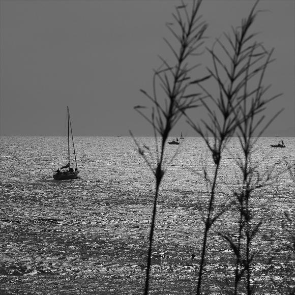 春の海-2_R