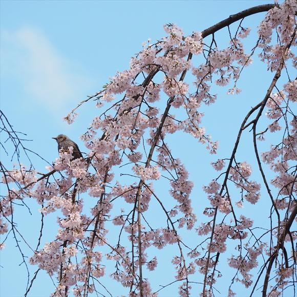 春暖-1_R