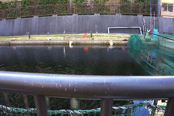 大横川親水公園006