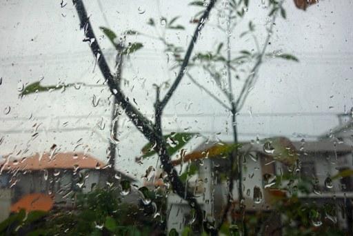 朝雨-a DSC01301