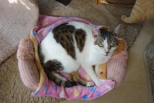 猫ダイエット-a DSC01334