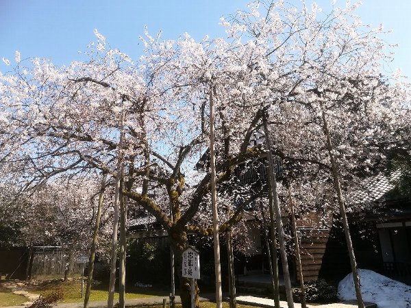 joufugi2-echizen-006.jpg
