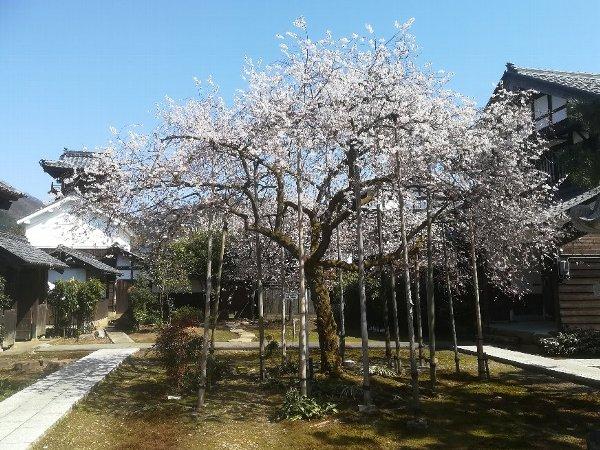 joufugi2-echizen-012.jpg