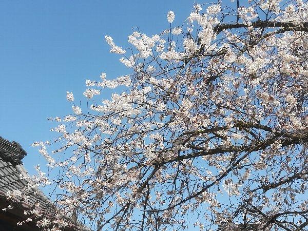 joufugi2-echizen-015.jpg