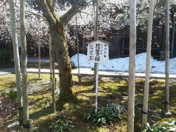 joufugi2-echizen-023.jpg