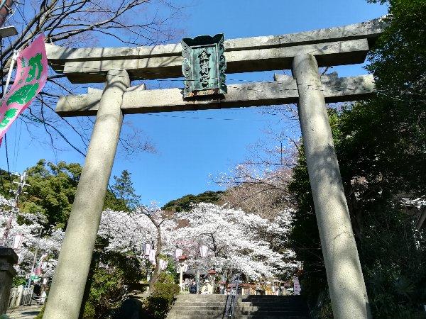 kanakasakigu3-tsuruga-015.jpg
