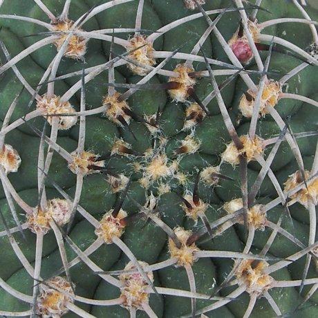 Sany0006--catamarcense f belene--P 73A--ex Eden