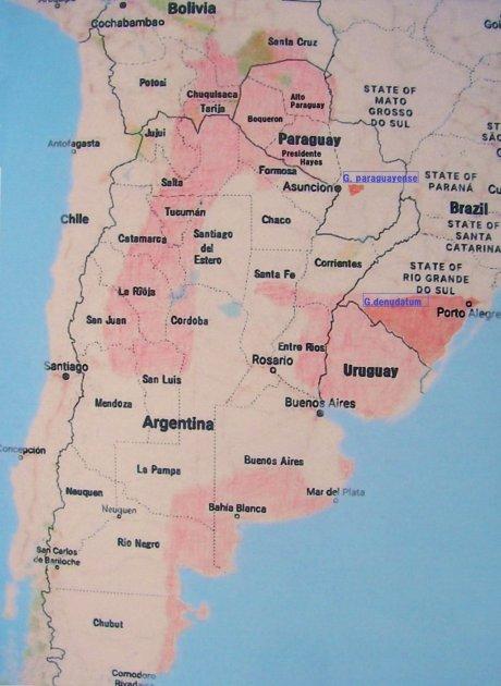 180225cc--Sany0111--gymno habitat map--parahuayense-denudatum