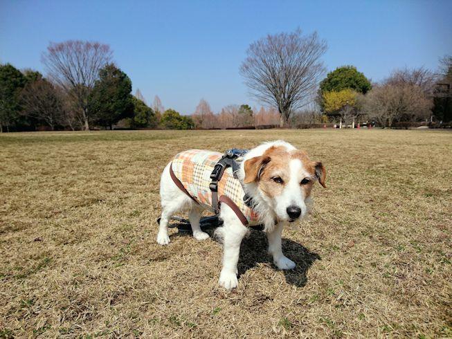 2018長岡公園189