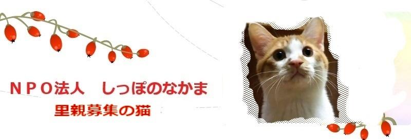 urawacats
