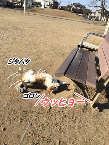 S_7621285794616.jpg