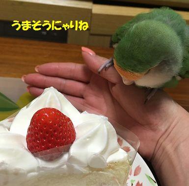 よこぷん誕生日3