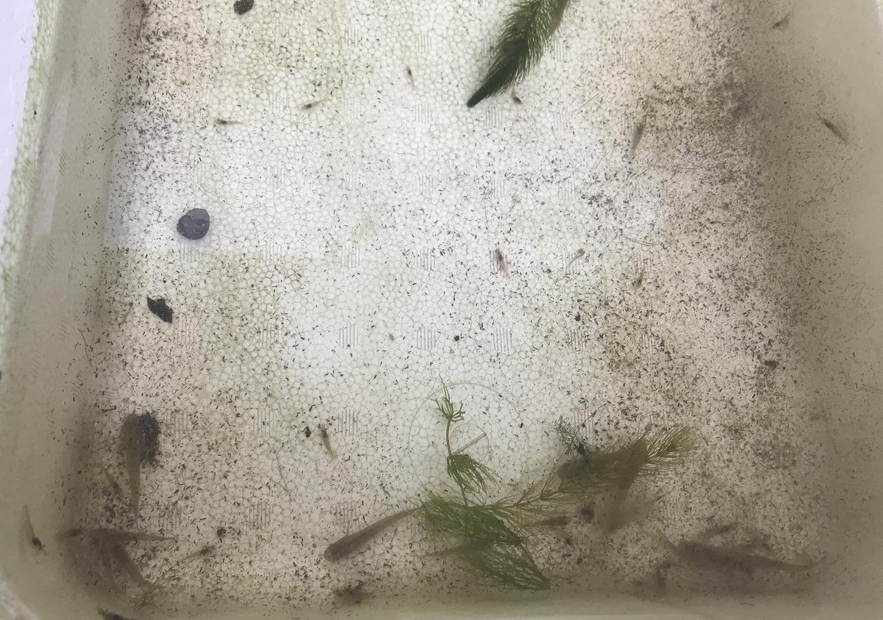 20180224-Killifish-I03.jpg