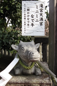Tenjin_12_240x360.jpg
