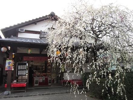 Tenjin_29_440x330.jpg