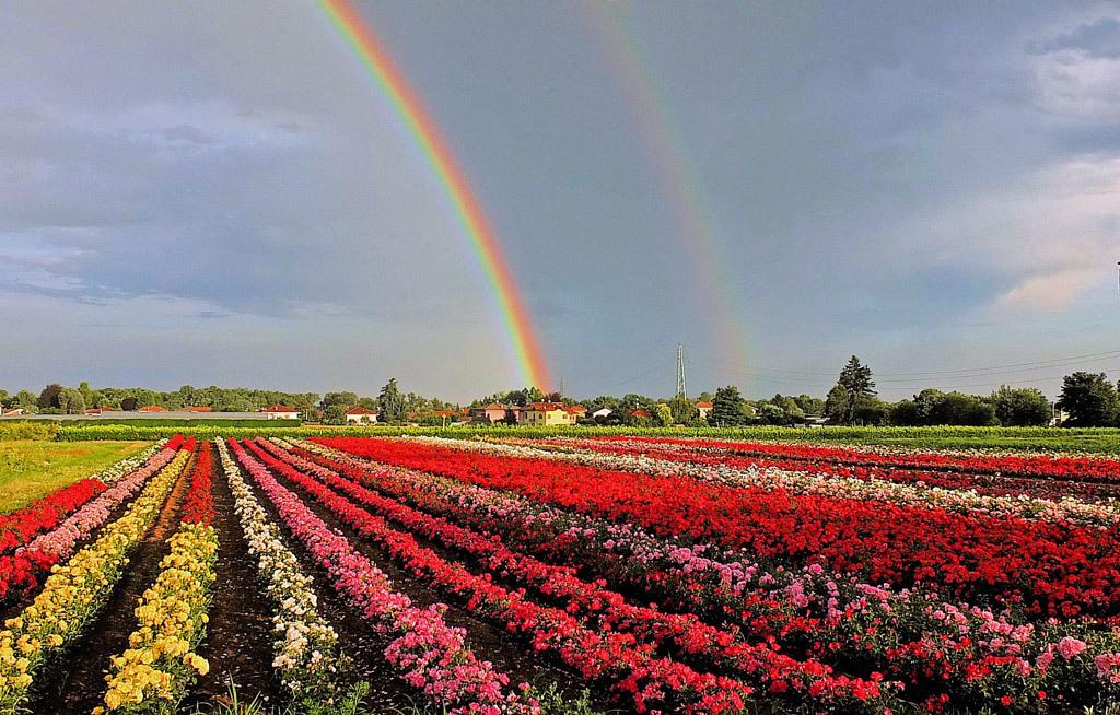 雨が降っても、潜在意識、阿頼耶識は虹に変えてしまう