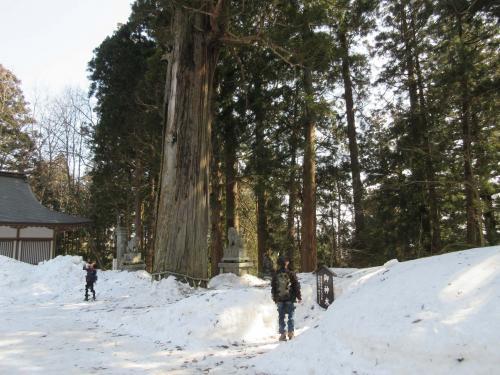樹齢七百年の御神木