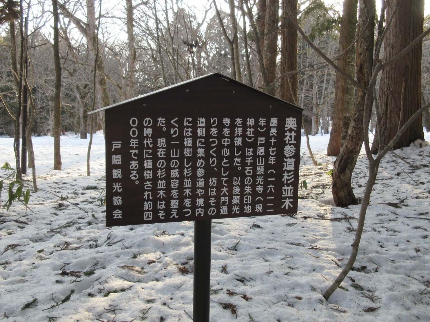 奥社参道杉並木について