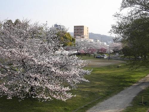 20180328_桜3