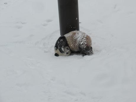 Super cuteポーズのパンダ