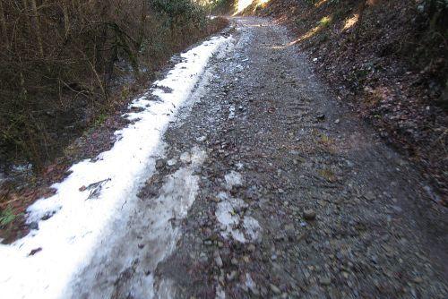 雪が残る林道
