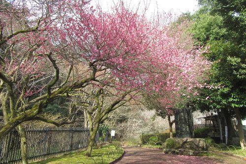 駒木野公園