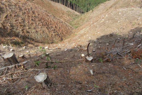 大規模伐採地