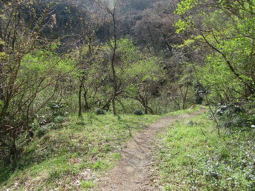 新緑の大山林道