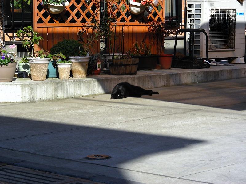 寝ている黒猫1