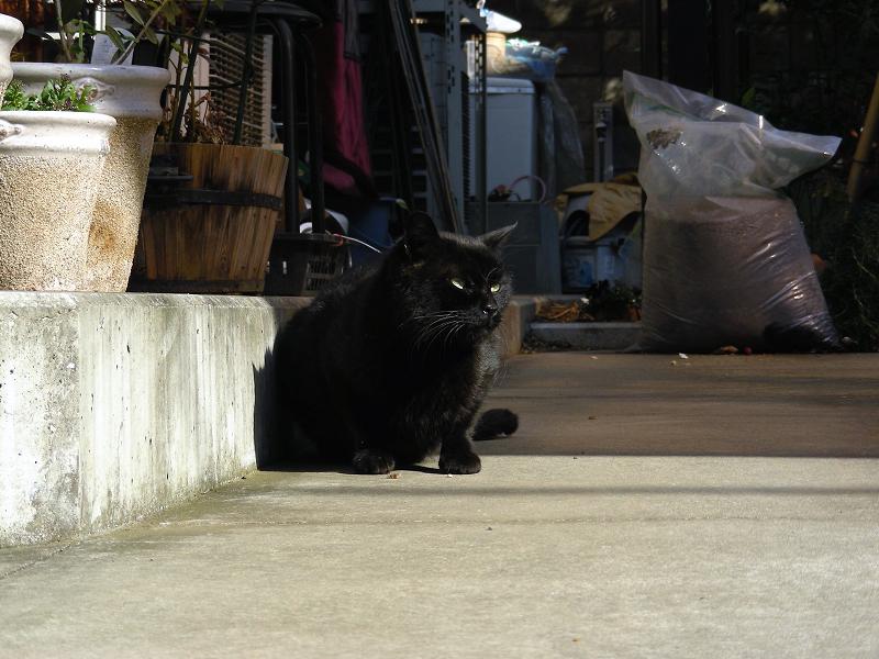 寝ている黒猫3