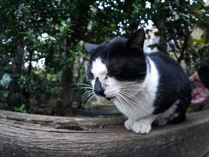 枕木の黒白猫2