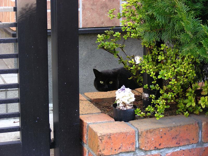 花壇の黒猫1