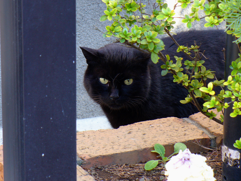 花壇の黒猫2