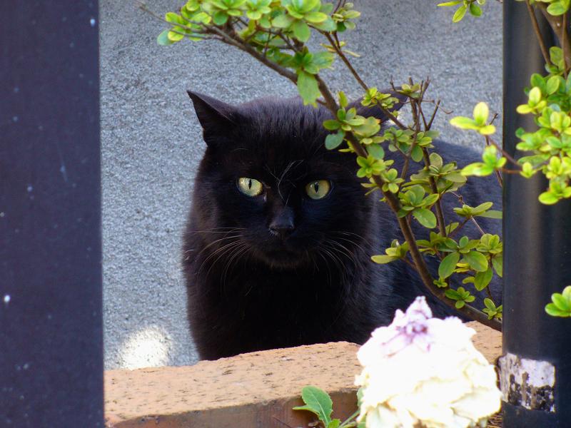 花壇の黒猫3