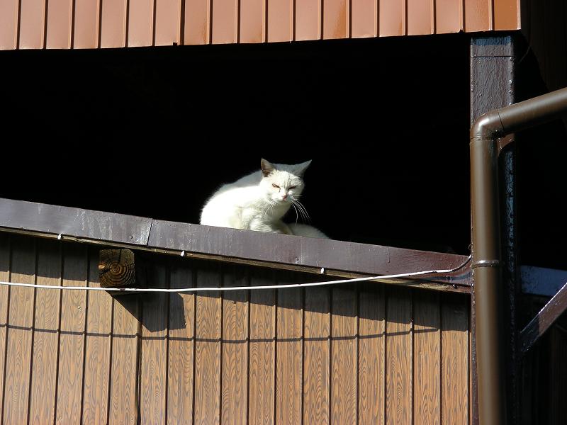 物置の白猫3