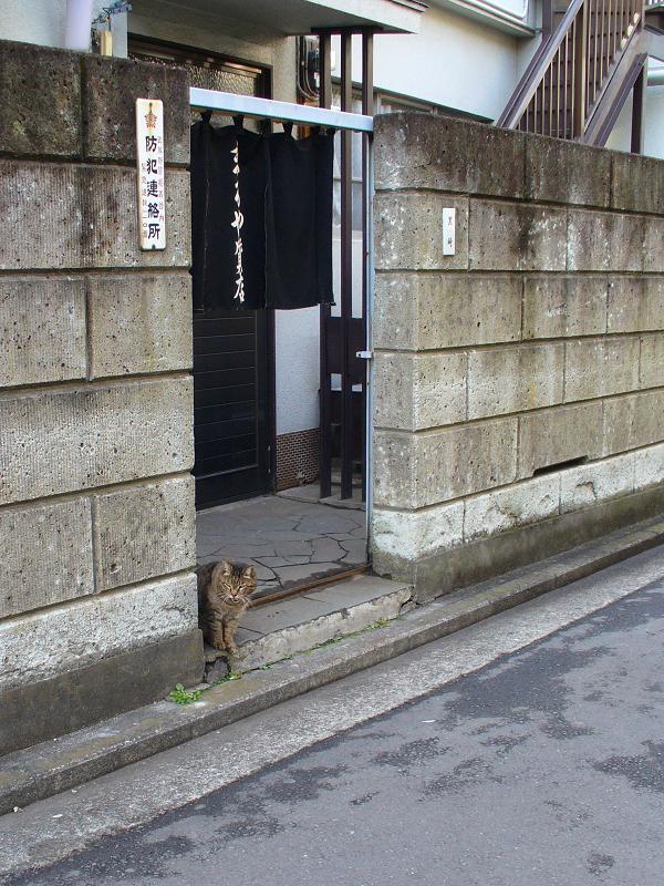 質屋のキジトラ猫1