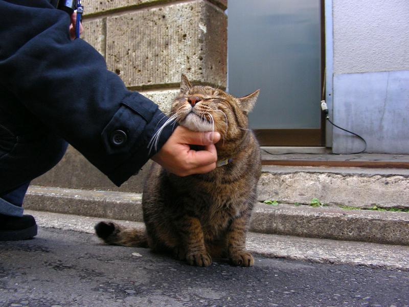 質屋のキジトラ猫3