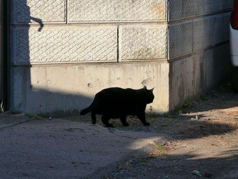 ブロック塀角の黒猫1
