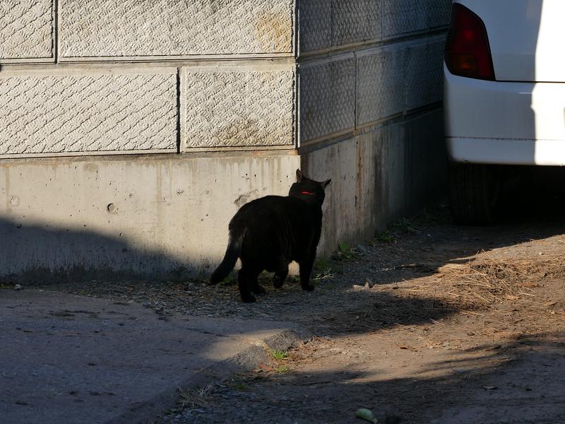ブロック塀角の黒猫2